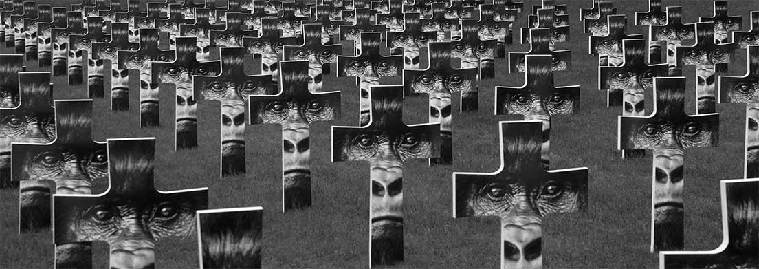 Vue du cimetière des gorilles