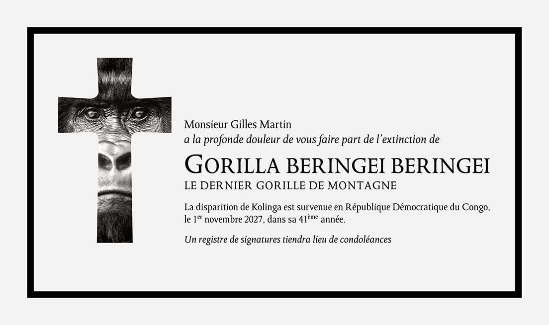 Faire-part du décès pour l'extinction du Gorilla Beringei Beringei en 2027