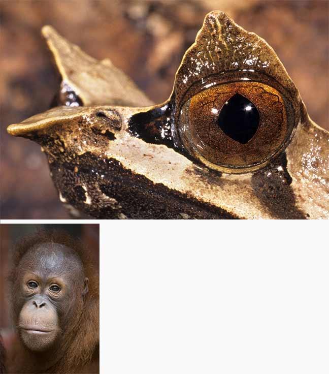 Photographies de Gilles Martin : Amphibien et singe de Bornéo