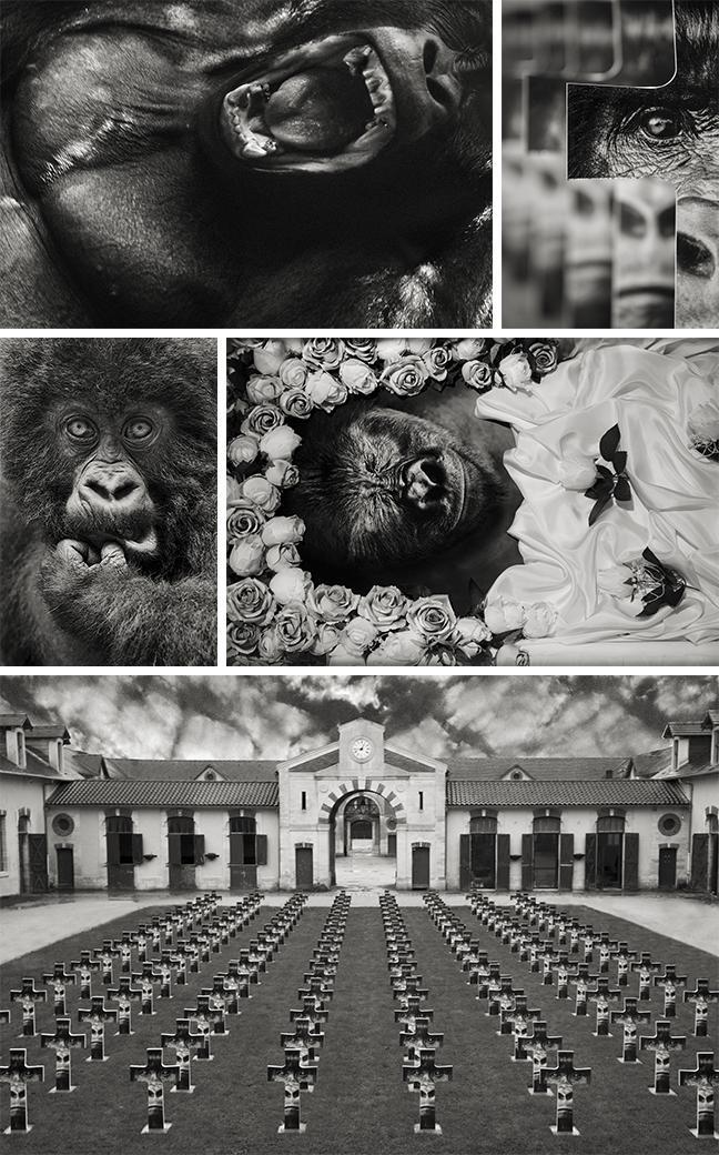 Photographies de Gilles Martin : « 2027 - Mémoires d'un dos argenté »
