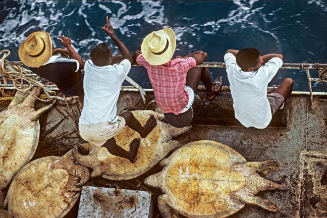 Photographie de Gilles Martin : Trafiquants de tortue de mer, Océan Indien.