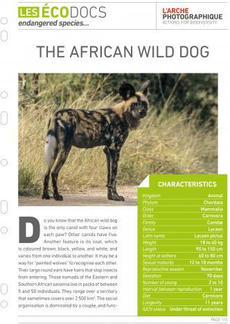 First page of The african wild dog