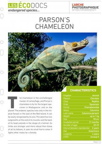 First page of Parson's chameleon