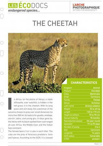 First page of The cheetah