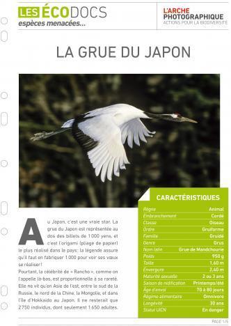 Première page de La grue du Japon