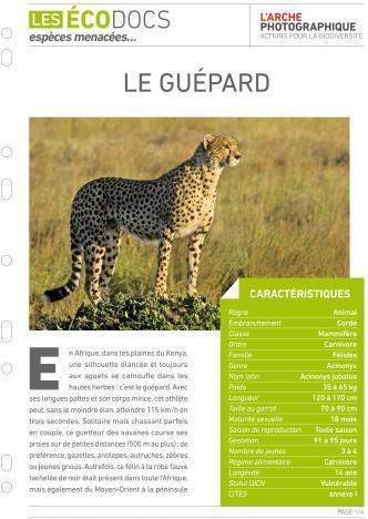 Première page de Le guépard