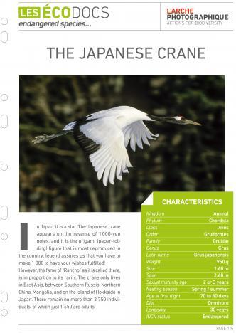 First page of The japanese crane