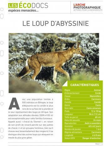 Première page de Le loup d'Abyssinie