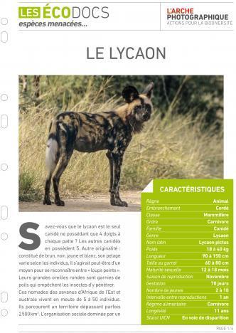Première page de Le lycaon