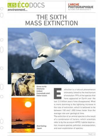 First page of Ecodoc card : The Sixth Mass Extinction