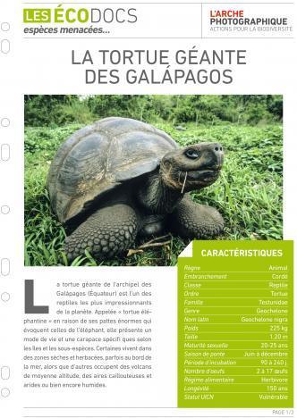 Première page de La tortue géante des Galapagos