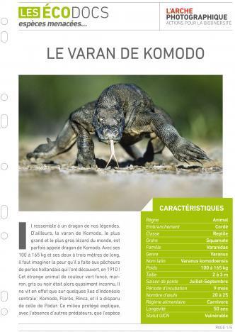 Première page de Le varan de komodo