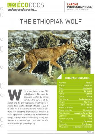First page of The ethiopian wolf