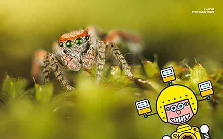 Aperçu de l'image Saltic spider