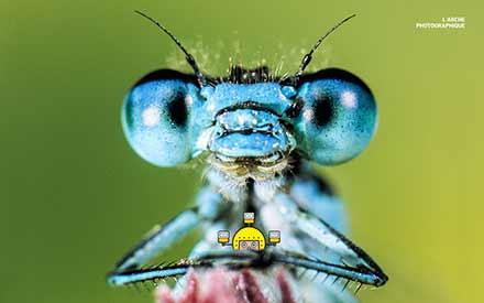 Aperçu de l'image Dragonfly