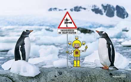 Aperçu de l'image Gentoo penguin